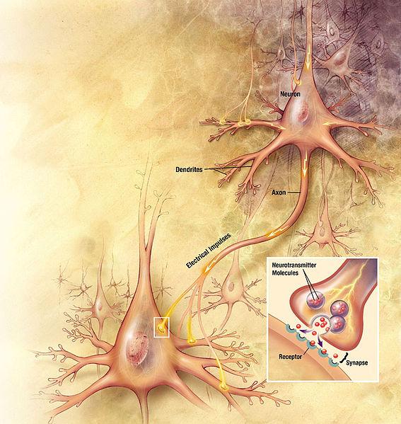 Bild eines Neurons